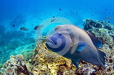 Fische bei Great Barrier Reef