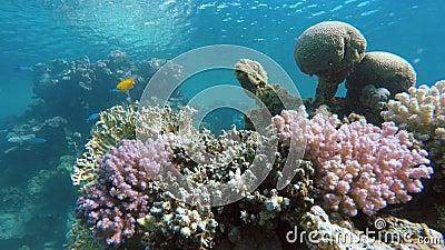 Fische des Korallenriffs Die Tiefe des Ozeans stock video