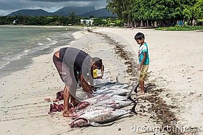 fischer und gro e thunfische auf dem tamarin setzen reinigungsfische auf den strand. Black Bedroom Furniture Sets. Home Design Ideas