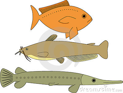 Fish Stock Photos - Image: 21291953