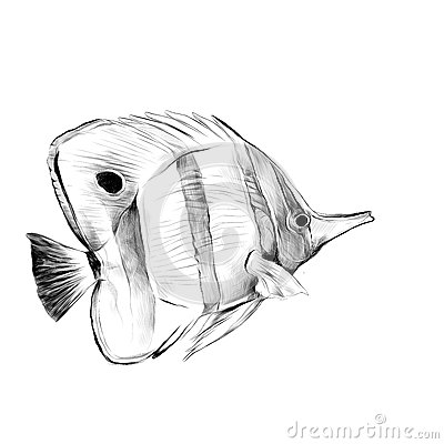 Free Fish Acanthur Sketch Vector Royalty Free Stock Photo - 91831325
