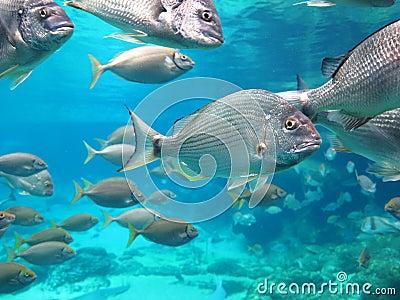 Fish school aquarium