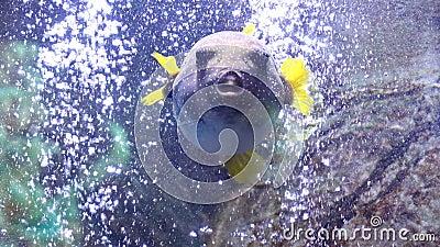 Fish in aquarium stock photo image 53530406 for Air swimming fish