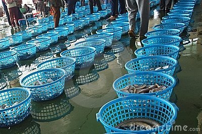 Fish Auction in Taiwan