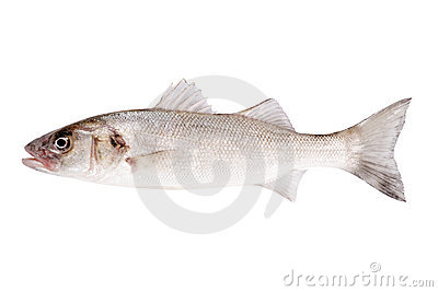 Fish bass isolated