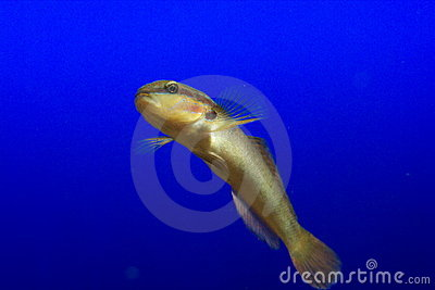 Fish on blue background