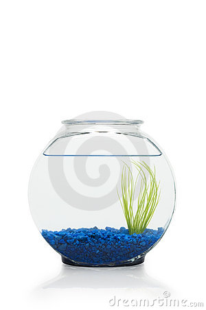 Fish Bowl Royalty Free Stock Photo Image 6244705