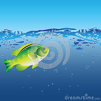 Fish of the bubbles