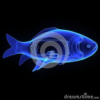 Fish Circulatory System Stock Illustration - Image: 49323379