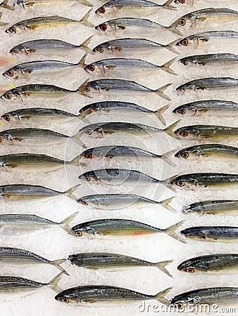 Fish Stock Photo Image 58240778