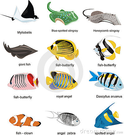 Free Fish Collection Stock Photos - 8878633