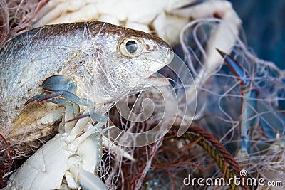 Fish and crab