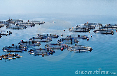 Fish cultivation