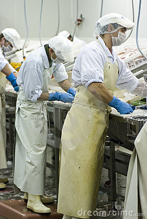 Free Fish Cutters At Work Royalty Free Stock Photo - 6772765