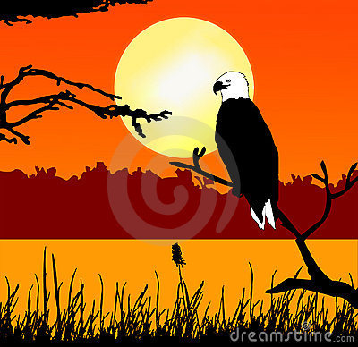 Fish eagle in sunset