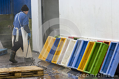 Fish factory worker