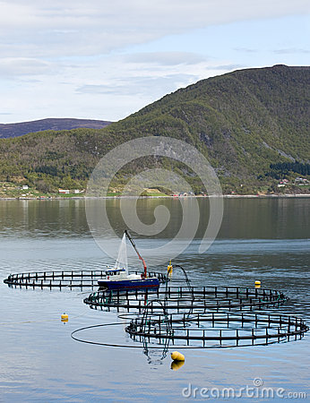 Free Fish Farming Royalty Free Stock Image - 40580816