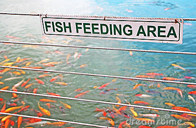 Fish Feeding Sign