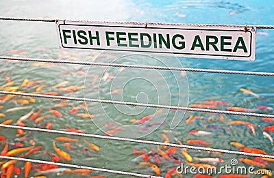 Fish Feeding Sign