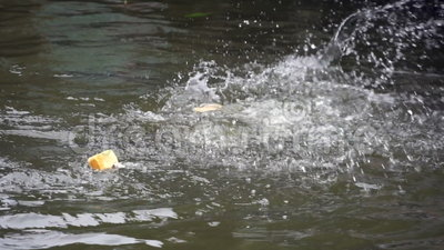 Fish are Fighting for Breads. Fish feeding is one of favorite activities at Thai floating market stock footage