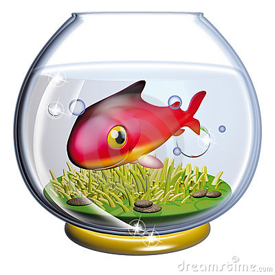 Fish in the fishbowl