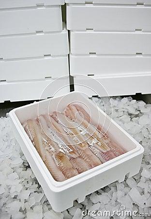 Fish food in box