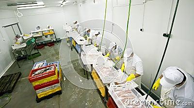 Fish food factory