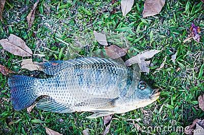 Fish on grass