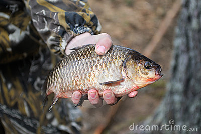 Fish in hand