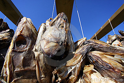 Fish Heads I, Lofoten