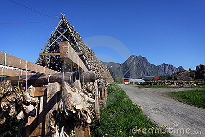 Fish Heads II, Lofoten