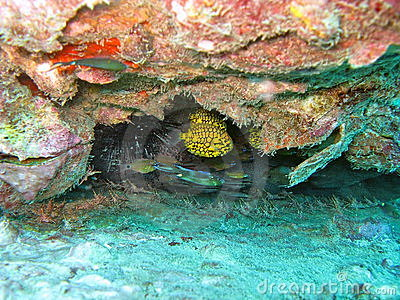 Fish hiding in coral reef