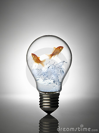 Free Fish In The Bulb Stock Photos - 8249673