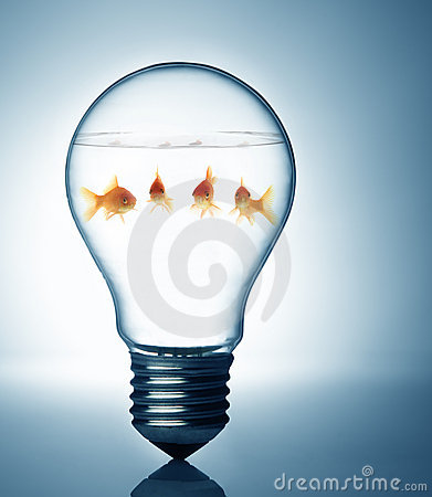 Free Fish In The Bulb Stock Photo - 8249750