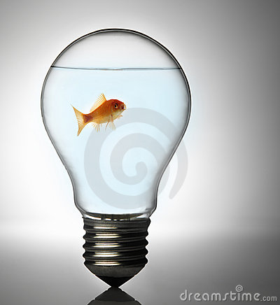 Free Fish In The Bulb Stock Photo - 8249820