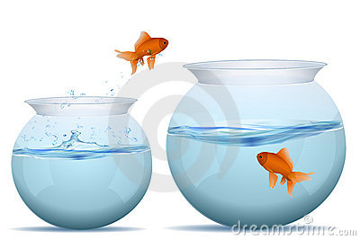 Fish jumping from one tank to another