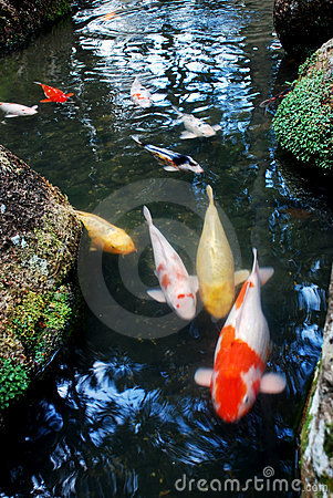 Fish and landscapes
