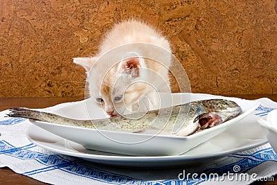 Fish licking