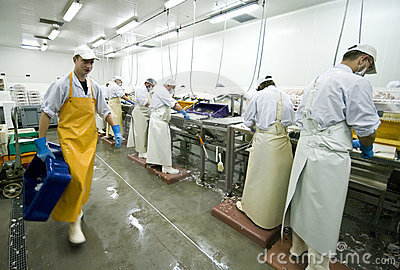 Fish manufacture workers