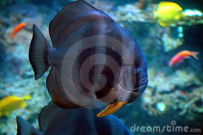 Fish in marine aquarium