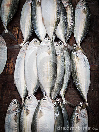Free Fish Market Royalty Free Stock Image - 49463506