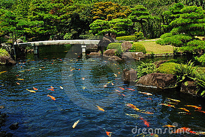 Fish Pond At Japanese Garden Royalty Free Stock Photos Image