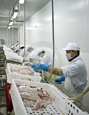 Free Fish Processing Royalty Free Stock Photography - 6773487