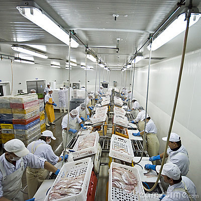 Free Fish Processing Factory Stock Images - 6772544