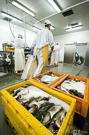 Fish processing manufacture