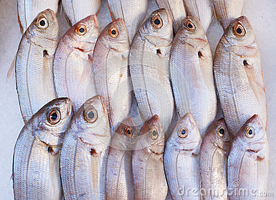 Fish for sale on market