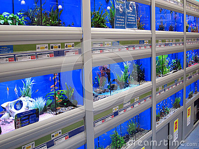 fish swimming in tanks in a pet store editorial image