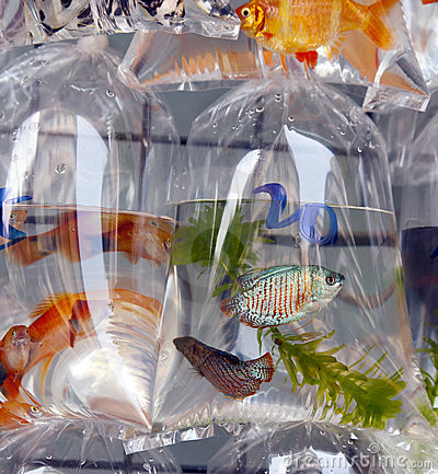 Fish for sale in plastic bags