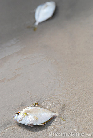 Fish on a sandy