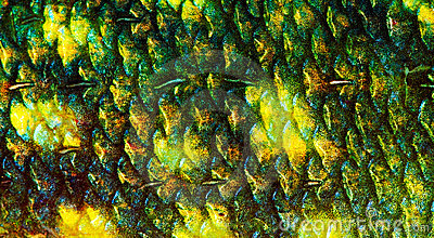 Fish scale stock photography image 15088042 for Do all fish have scales